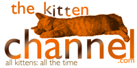 Thekittenchannel